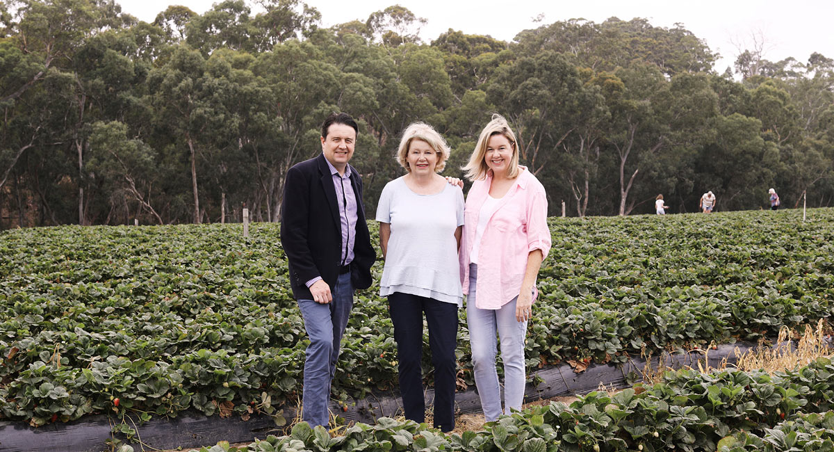 THE HUMBLE STRAWBERRY: FROM THE ADELAIDE HILLS TO THE WORLD